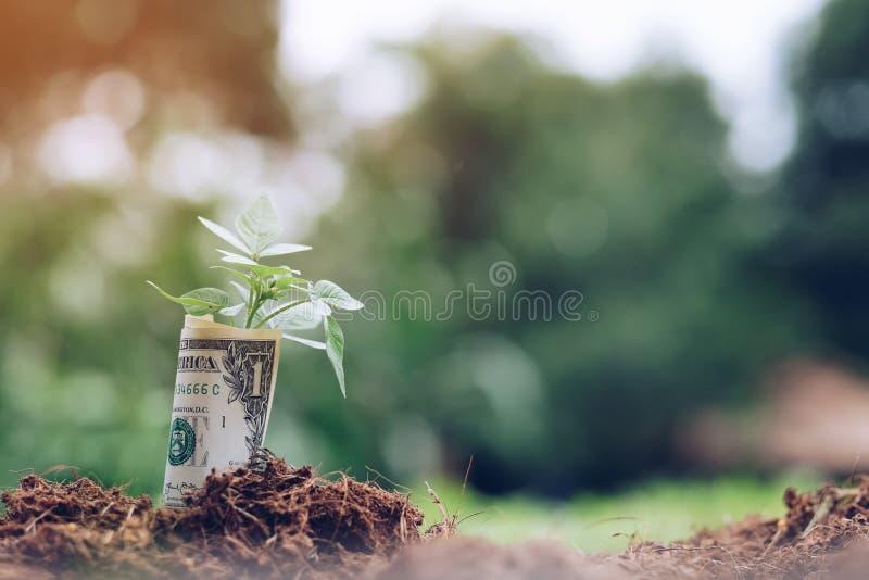 Amerikaanse dollars en jonge plant het groeien op grond met groene achtergrond royalty-vrije stock fotografie