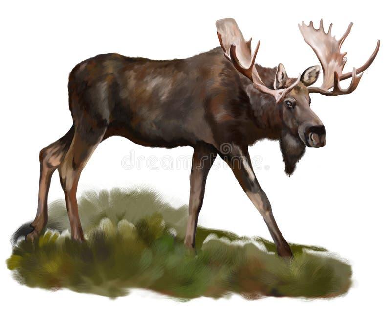 Amerikaanse elanden   vector illustratie