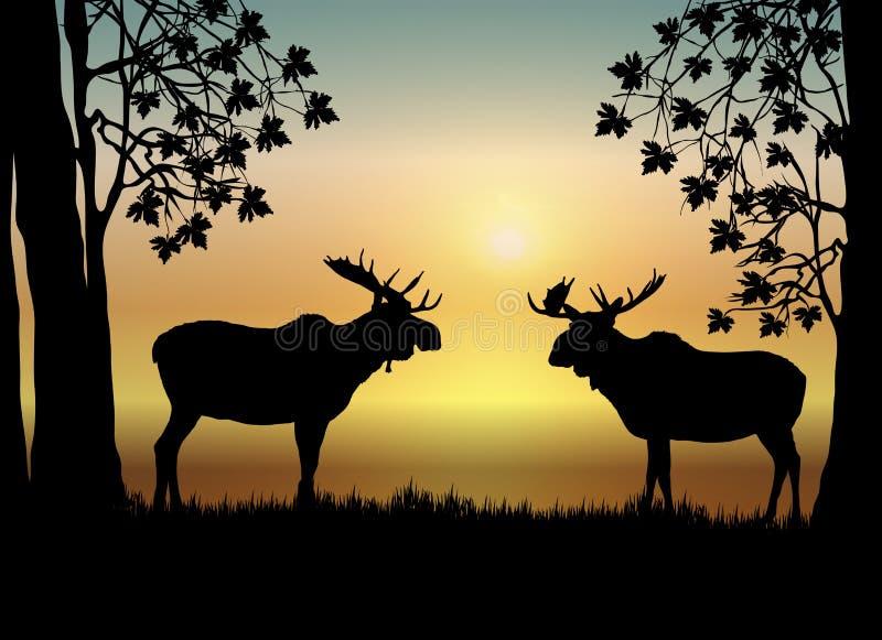 Amerikaanse elanden bij Zonsopgang royalty-vrije illustratie