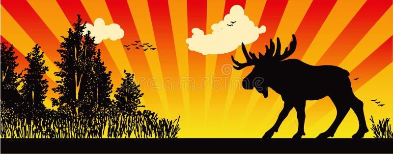 Amerikaanse elanden in het hout stock illustratie
