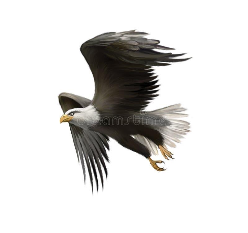 Amerikaanse kale die adelaar tijdens de vlucht op wit wordt geïsoleerd royalty-vrije illustratie