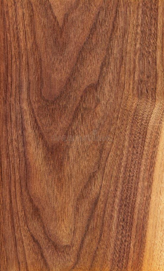 Amerikaanse okkernoot (houten textuur) royalty-vrije stock afbeeldingen