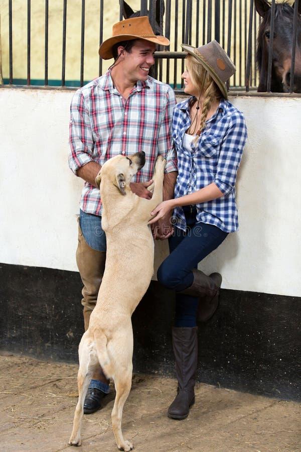 Amerikaanse paarhond royalty-vrije stock fotografie