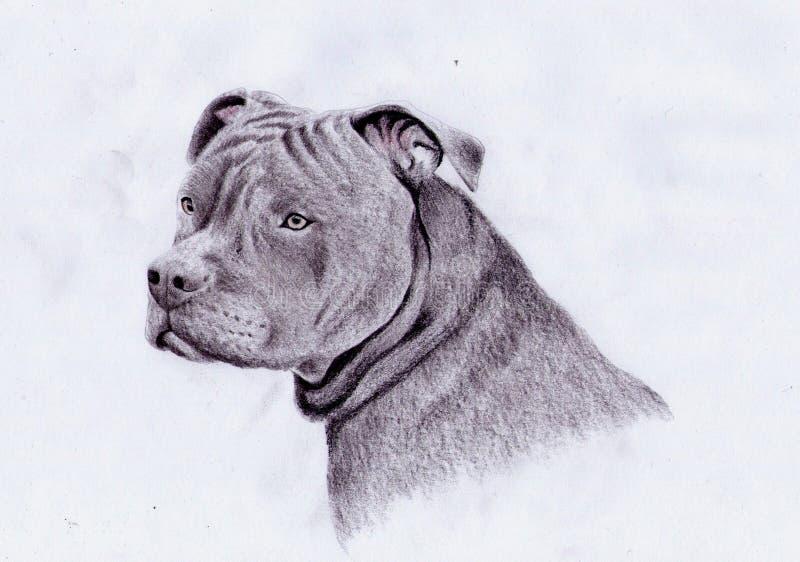 Amerikaanse pitbull royalty-vrije illustratie