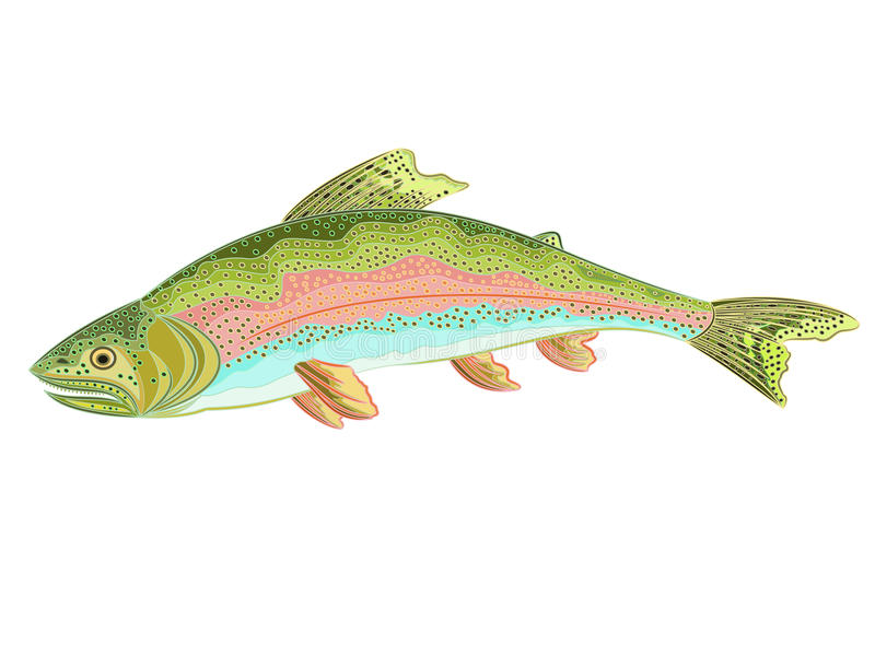 Amerikaanse regenboogforel (Oncorhynchus mykiss) royalty-vrije illustratie
