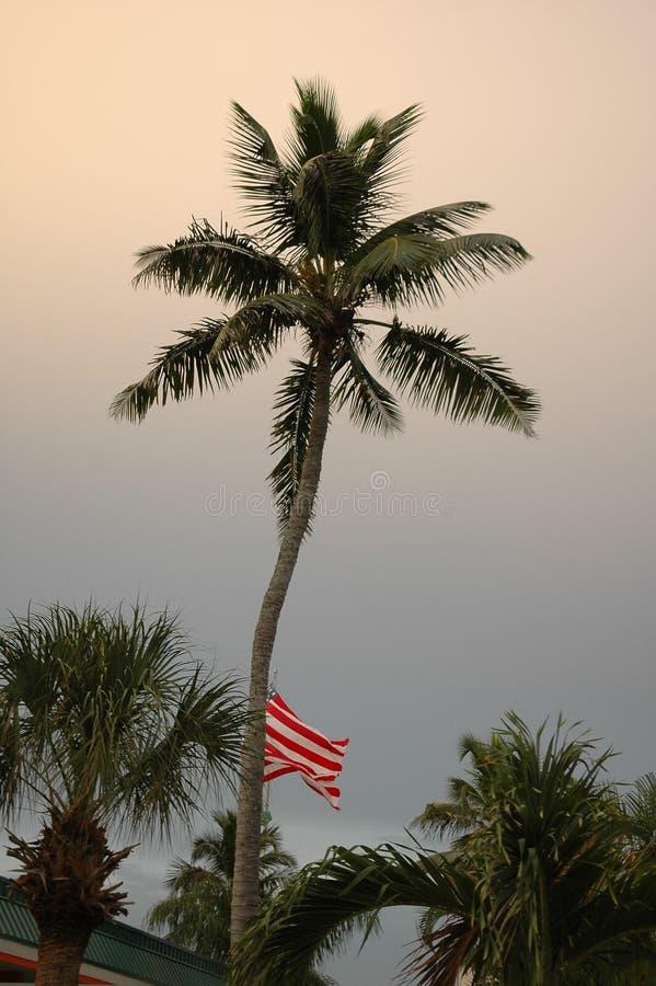 Amerikaanse Vlag en Palm stock afbeelding