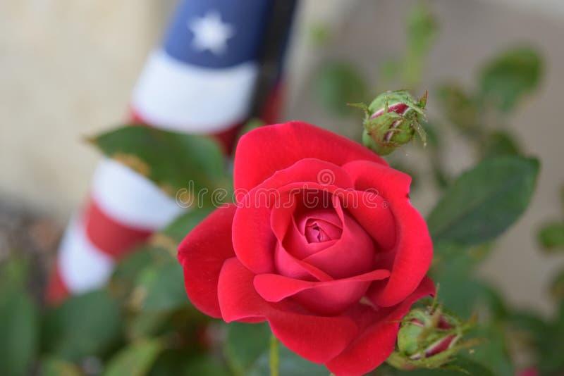 Amerikaner Rose und Flagge lizenzfreies stockfoto
