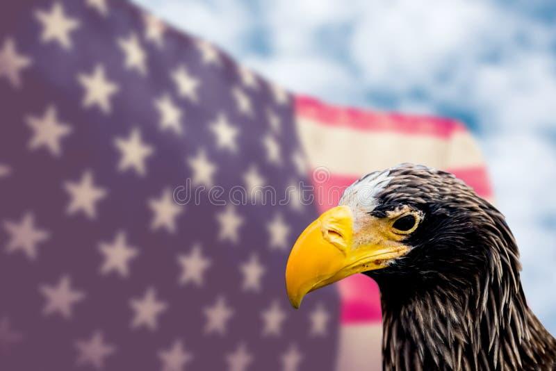 Amerikanische Flagge mit Falken lizenzfreie stockfotos