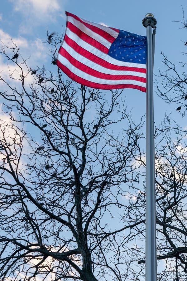 Amerikanische Flagge, Sternenbanner, brennend im Wind, Vögel durch, die in einem blattlosen Baum im Hintergrund, Stadtmitte sitze lizenzfreie stockfotos