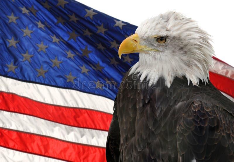 Amerikanische Flagge und kahler Adler lizenzfreie stockbilder