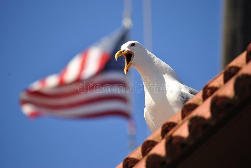Amerikanische Seemöwe stockfotografie