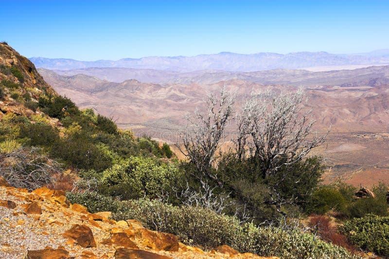 Amerikanische Wüste lizenzfreie stockfotos