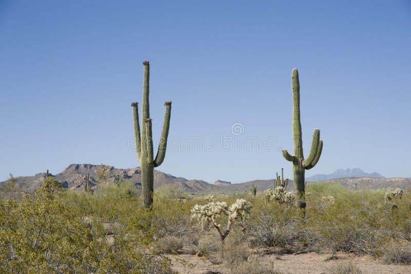 Amerikanische Wüste stockfoto
