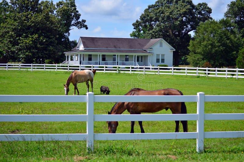 Amerikanischer Gutshaus-Pferdeschwein-Palisadenzaun stockbild
