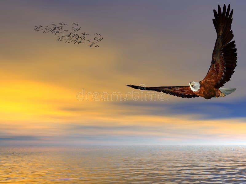 Amerikanischer kahler Adler, frei fliegend. lizenzfreie abbildung