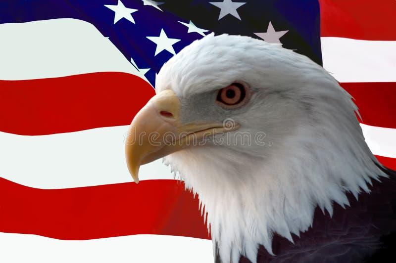 Amerikanischer kahler Adler mit Markierungsfahne stockfoto