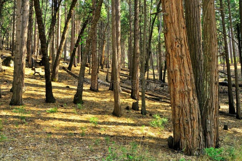 Amerikanischer Wald lizenzfreies stockbild
