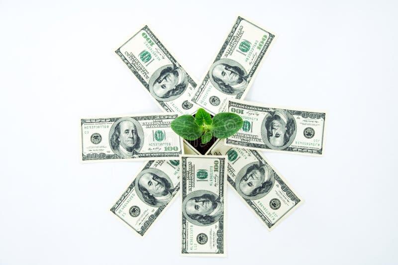 Amerikanisches Geld mit einem Sprössling lizenzfreies stockfoto