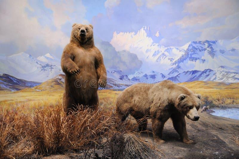 Amerikanisches Museum der Naturgeschichteansammlung stockbild