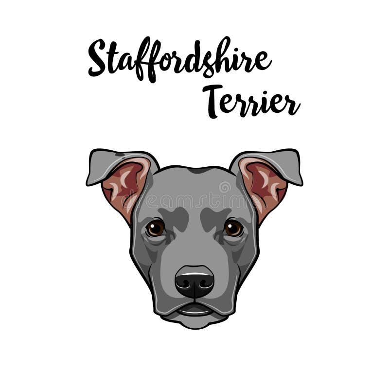amerikansk ståendestaffordshire terrier Hundframsidan, huvud, tystar ned gulligt husdjur vektor royaltyfri illustrationer