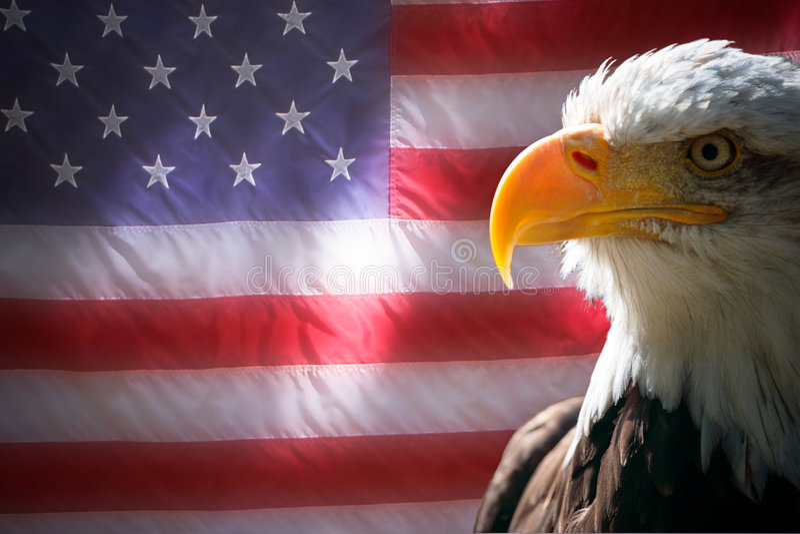 amerykańska orzeł flaga fotografia royalty free