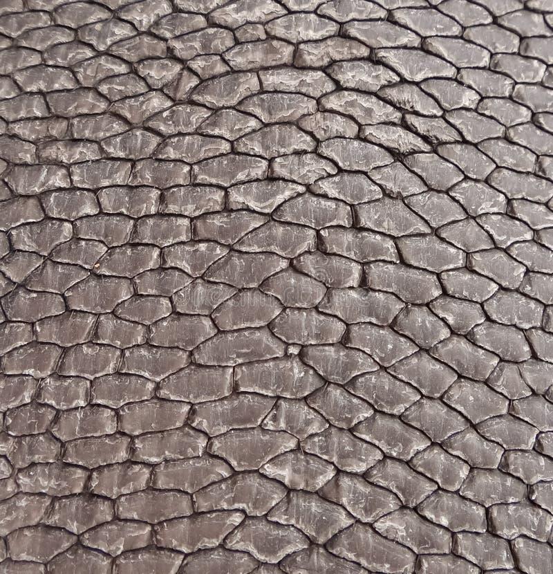 amerykański bobra szczegółu ogon obraz stock
