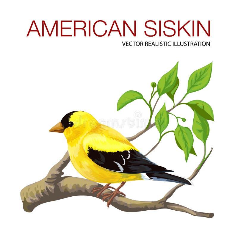 Amerykański czyżyk ilustracja wektor