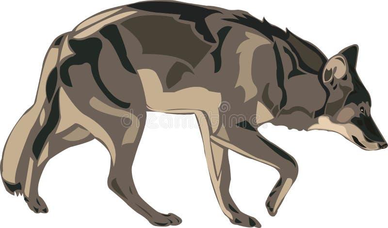 amerykański szary północny wilk royalty ilustracja