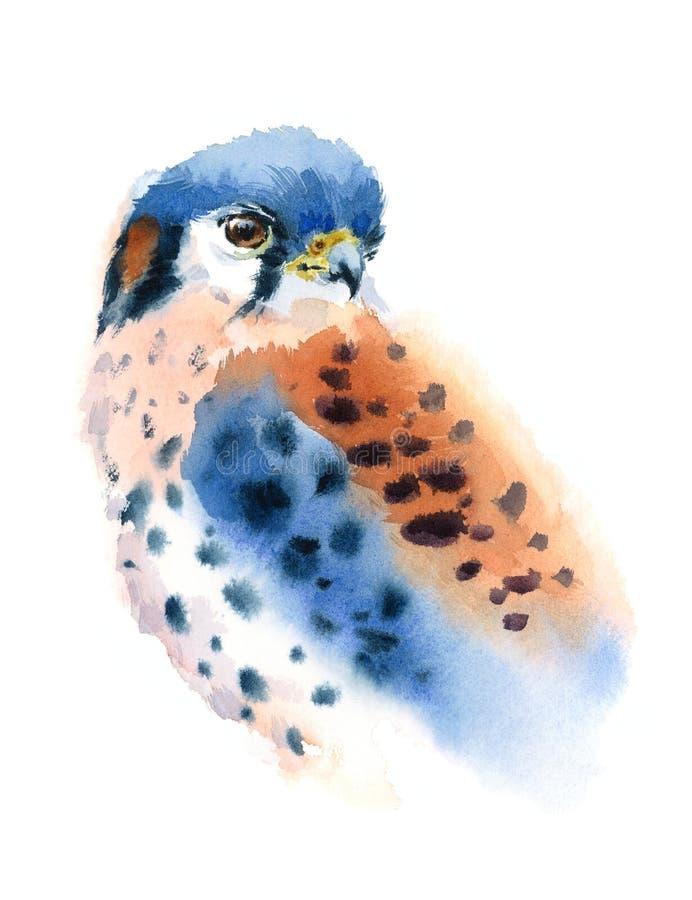 Amerykańskiej Kestrel akwareli Ptasia Ilustracyjna ręka Malująca ilustracji