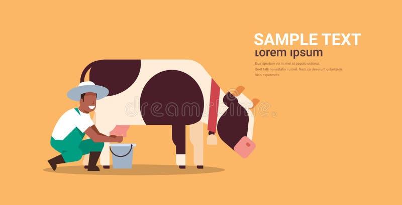 Amerykanin afrykańskiego pochodzenia doju męska średniorolna krowa w wiadra gospodarstwa rolnego zwierze domowy bydło śwież royalty ilustracja