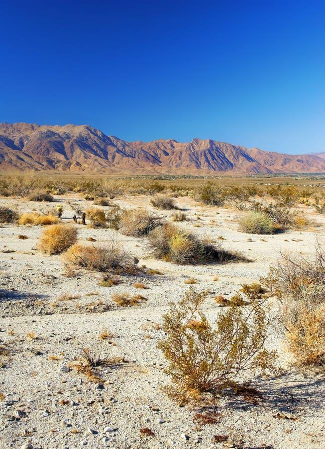 amerykanin pustynna północ obrazy stock
