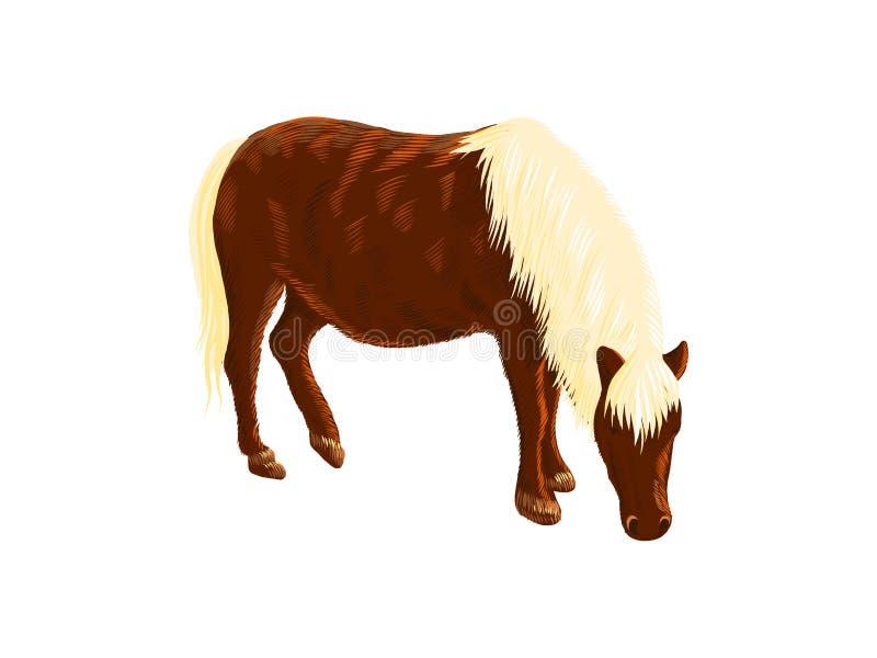 Amerykanina Miniaturowy ko?, kolorowego doodle nakre?lenia wektorowa ilustracja, r?ka rysuj?cy zwierz?cy rysunek, odizolowywaj?cy ilustracja wektor