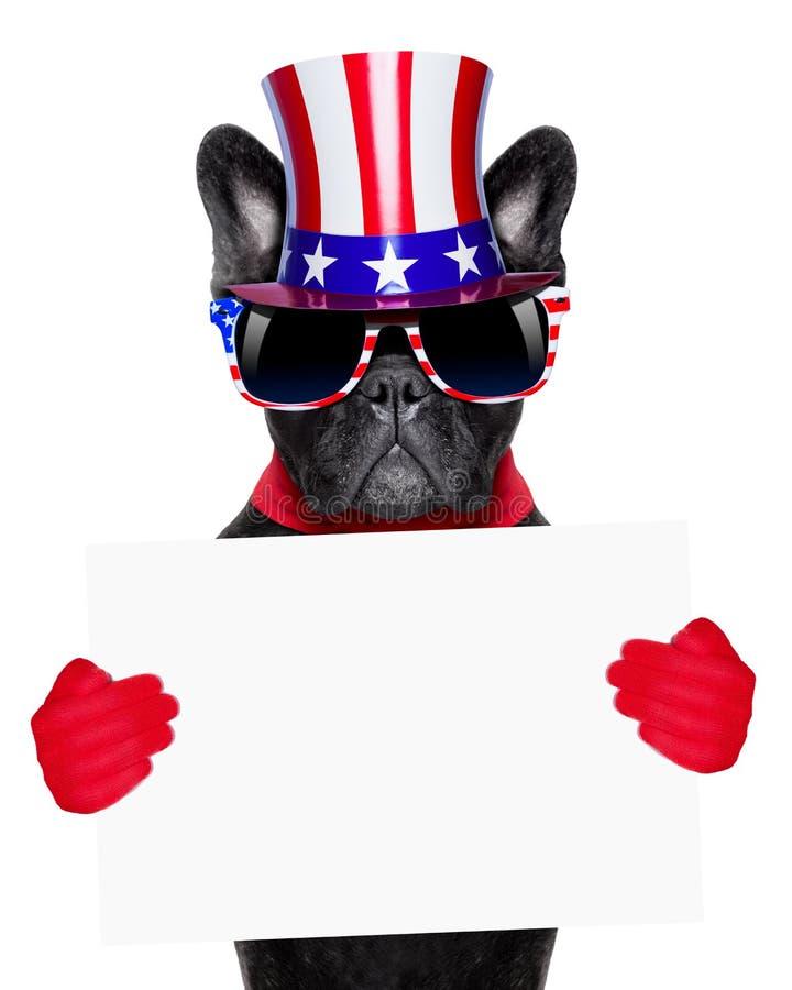 amerykanina pies zdjęcie royalty free