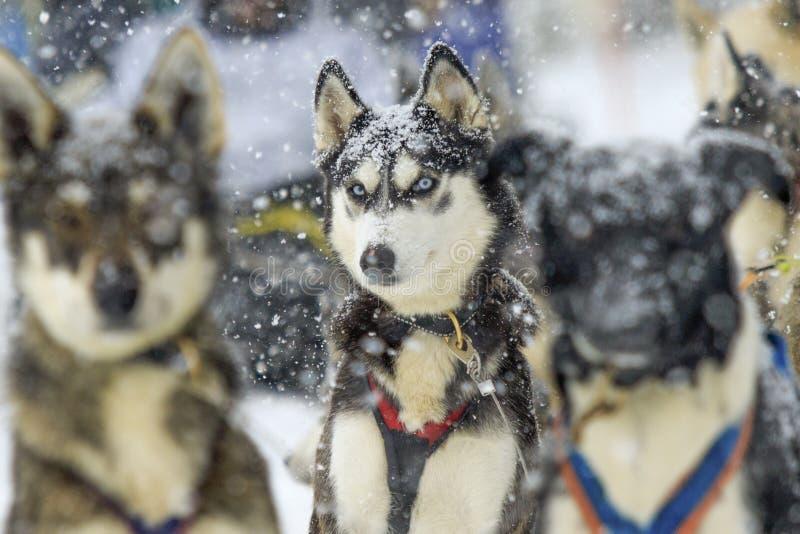 Ami d'hiver prêt pour de nouvelles aventures image libre de droits