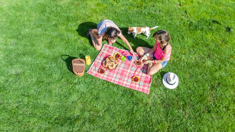 Amici femminili con il cane che ha picnic in parco, ragazze che si siedono sull'erba e che mangiano i pasti sani all'aperto, aere fotografia stock libera da diritti