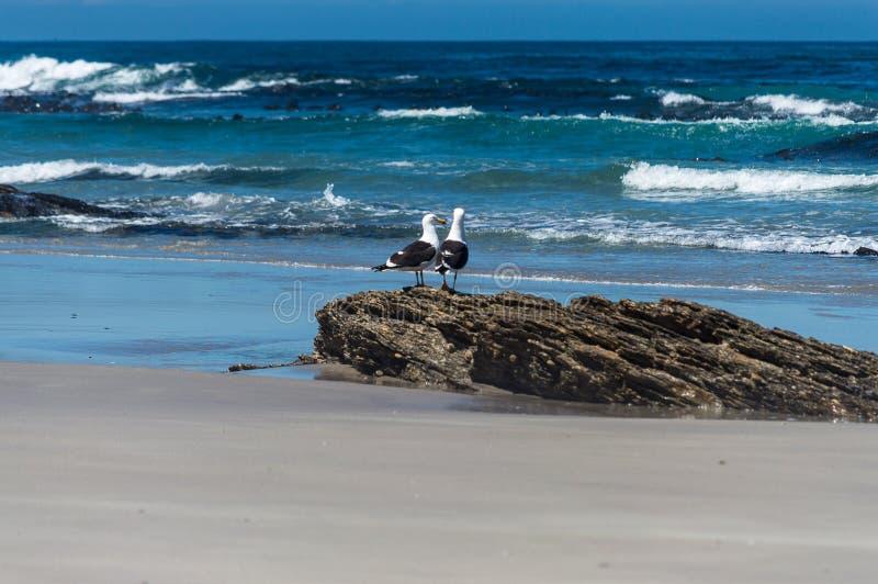 Amicizia della spiaggia immagine stock