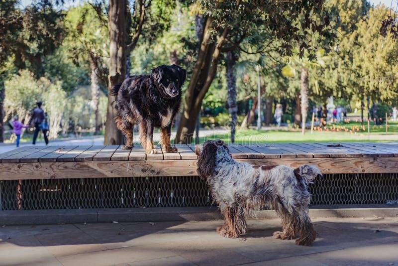 Amicizia urbana del cane di paesaggio immagine stock