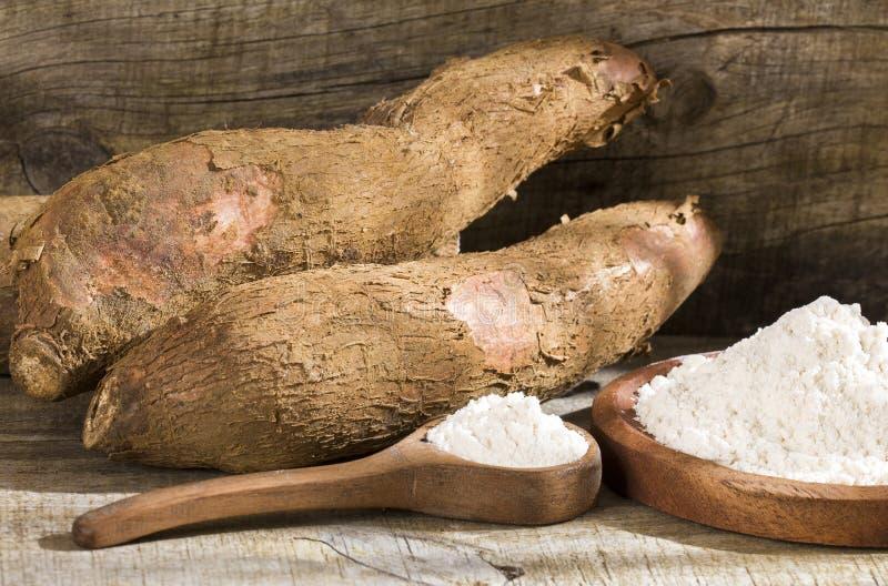 Amidon de manioc cru - Manihot esculenta Fond en bois photo stock