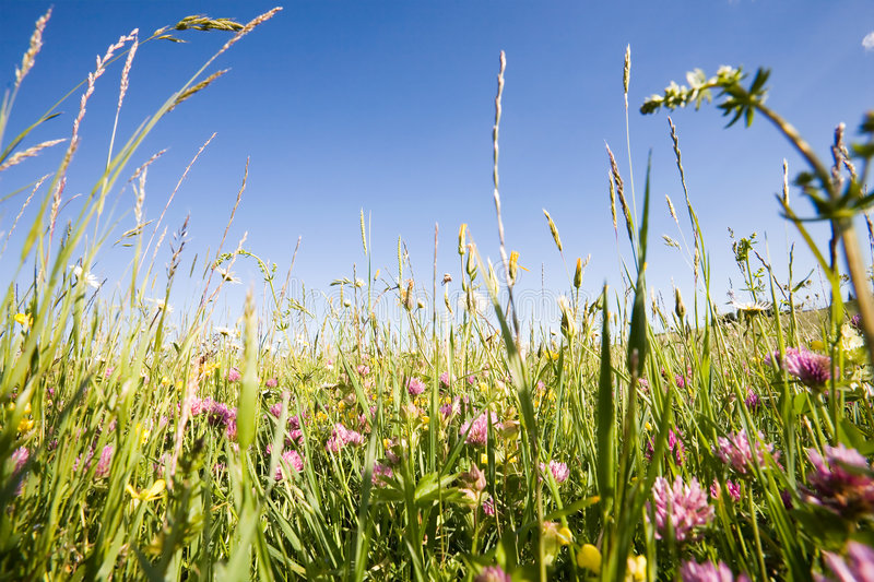 Amidst the grass and flowers royalty free stock photo