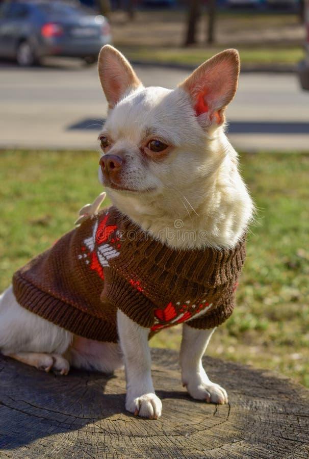 Amigo blanco del perrito del perro del ángel foto de archivo
