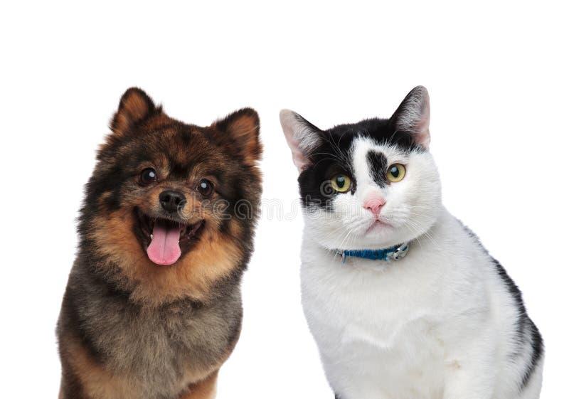 Amigos com fome do cão e gato que esperam o almoço imagens de stock
