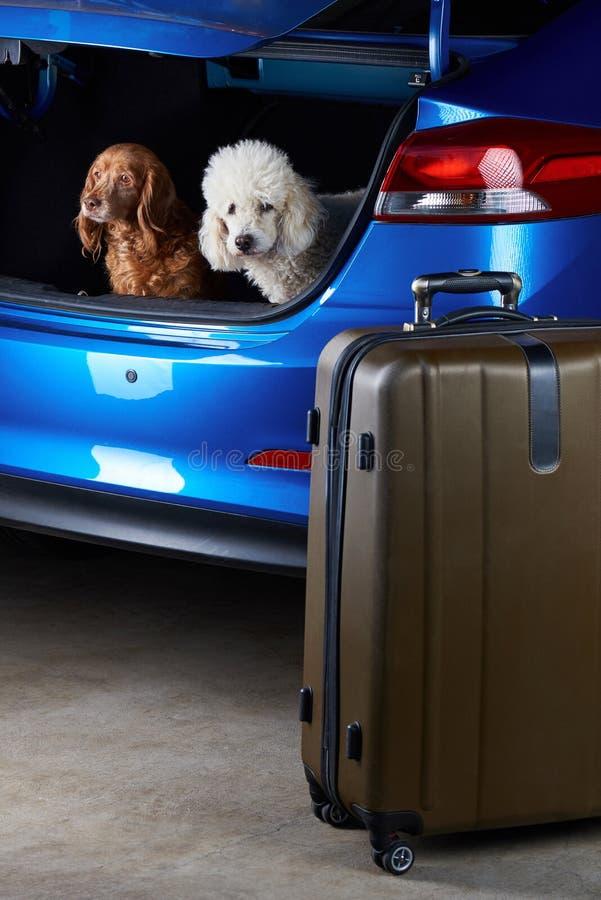 Amigos de los perros que viajan fotografía de archivo libre de regalías
