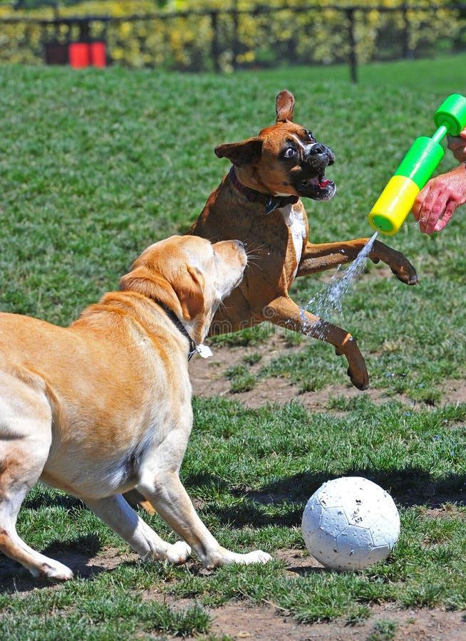Amigos del perro en el juego fotografía de archivo