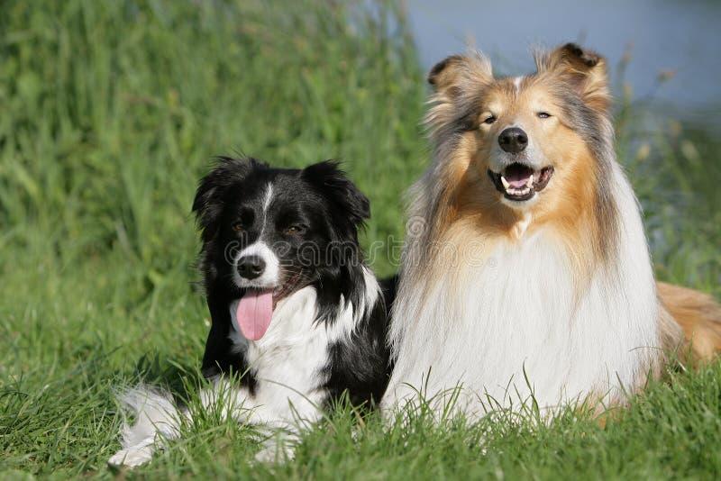 Amigos do cão foto de stock