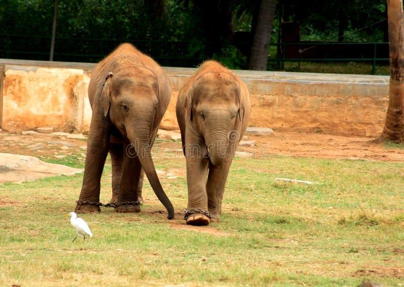 Amigos do elefante imagens de stock