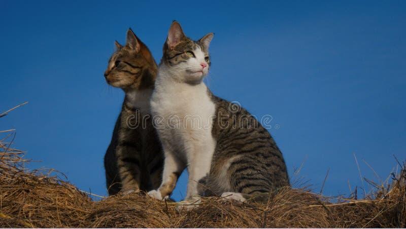 Amigos do gato que olham para fora no mundo fotografia de stock royalty free