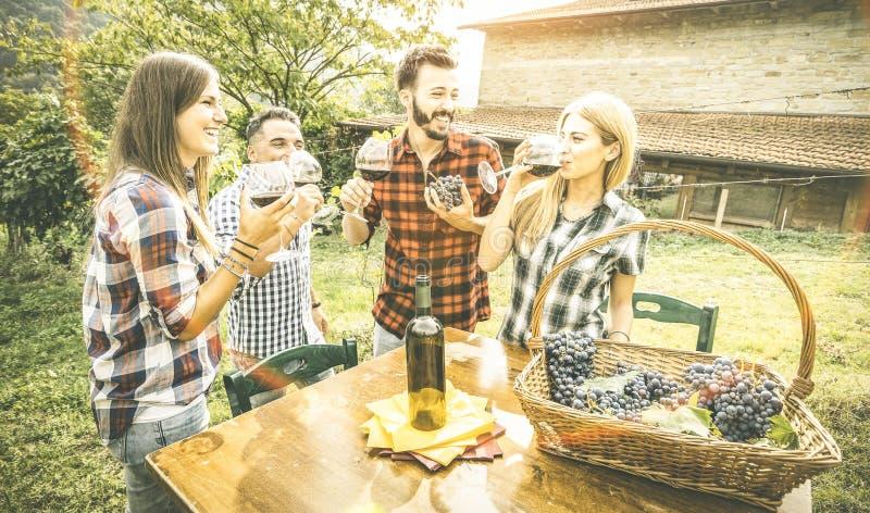 Amigos felizes que comem o vinho bebendo do divertimento no vinhedo da adega imagem de stock royalty free