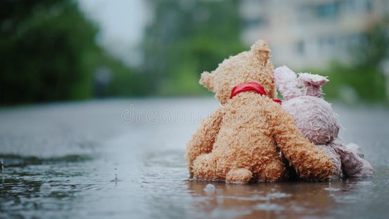 Amigos fiéis - um coelho e um filhote de urso sentam-se de lado a lado na estrada, molhada sob a chuva de derramamento Olhe para  imagens de stock royalty free
