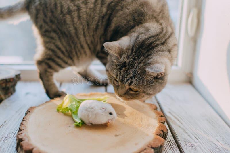 Amigos gato y hámster foto de archivo libre de regalías