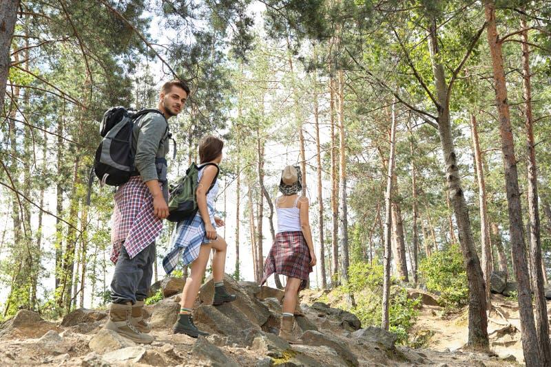 Amigos jovenes que caminan a través de bosque hermoso foto de archivo libre de regalías
